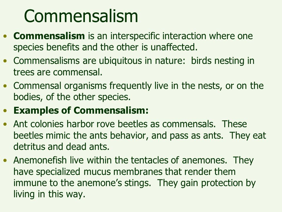 Commensalism Commensalism is an interspecific interaction where one species benefits and the other is unaffected.