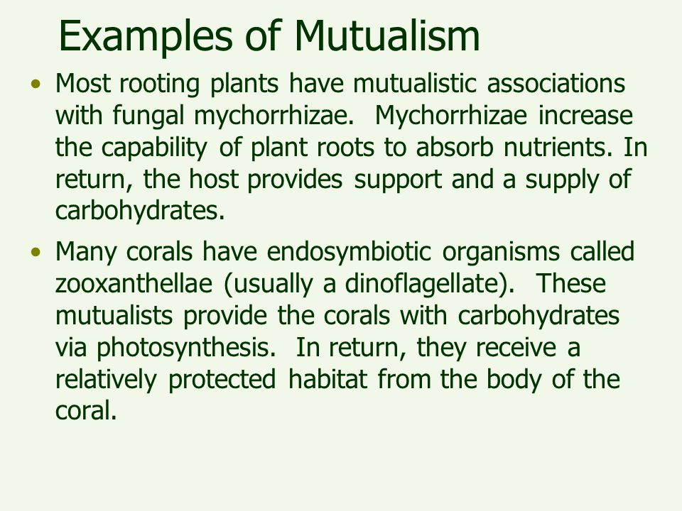 Examples of Mutualism