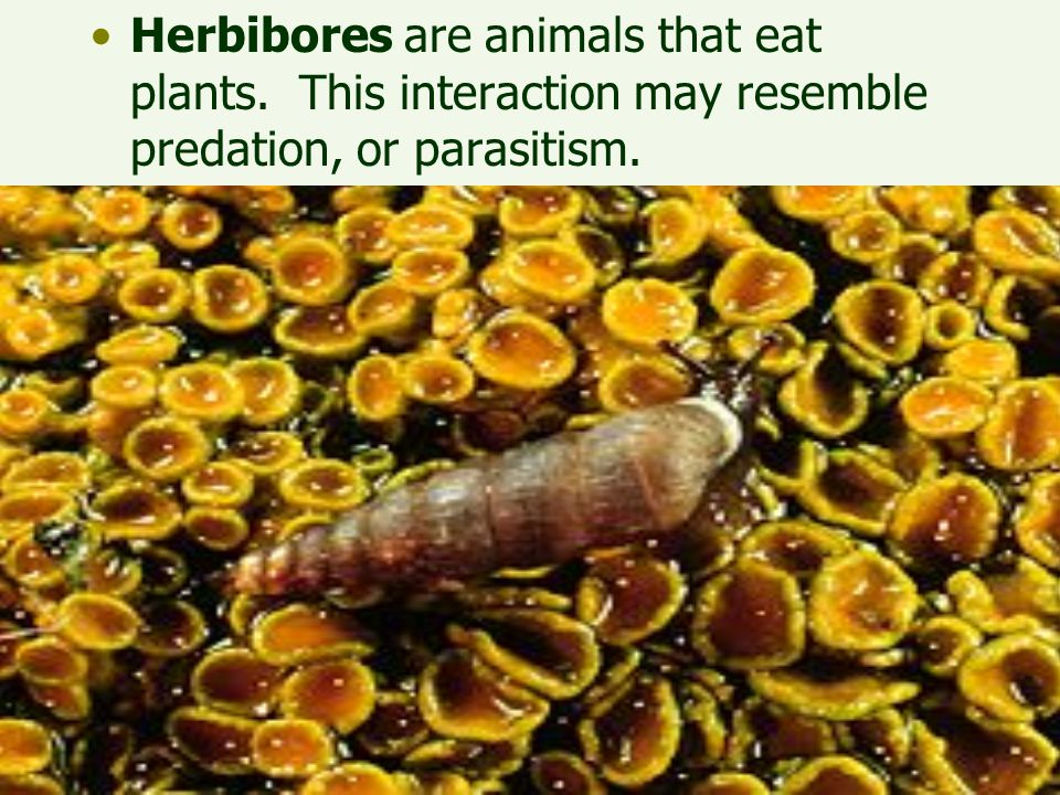 Herbibores are animals that eat plants