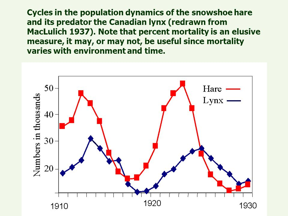 Cycles in the population dynamics of the snowshoe hare and its predator the Canadian lynx (redrawn from MacLulich 1937).