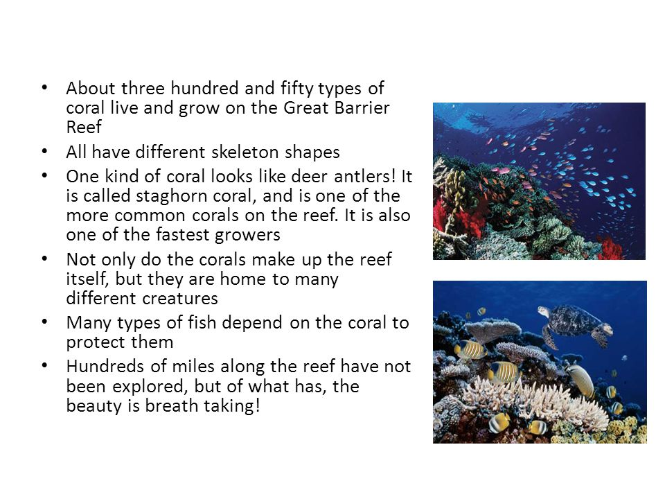 About three hundred and fifty types of coral live and grow on the Great Barrier Reef