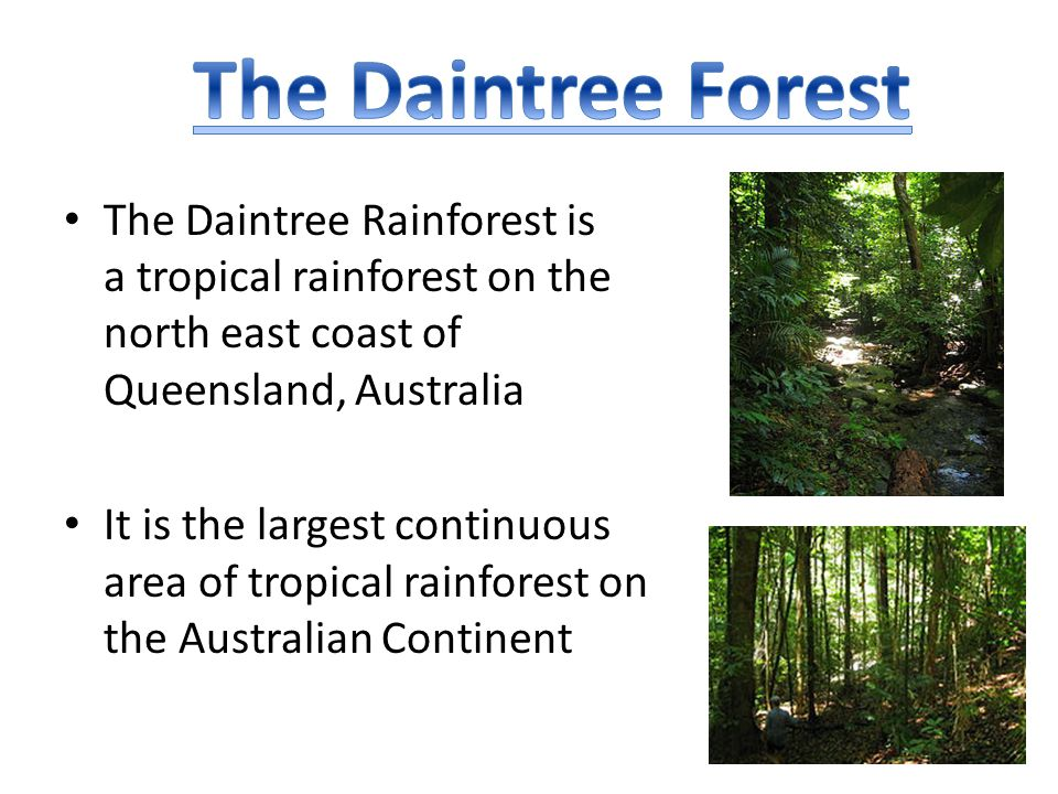 The Daintree Forest The Daintree Rainforest is a tropical rainforest on the north east coast of Queensland, Australia.