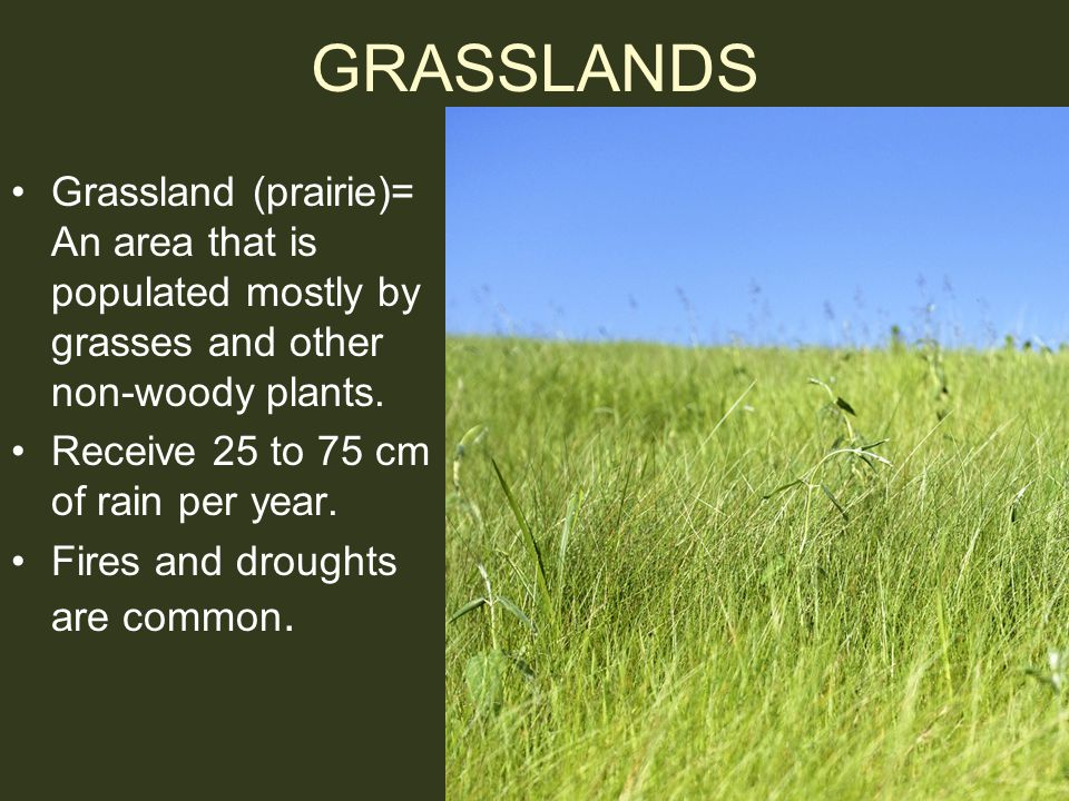 GRASSLANDS Grassland (prairie)= An area that is populated mostly by grasses and other non-woody plants.