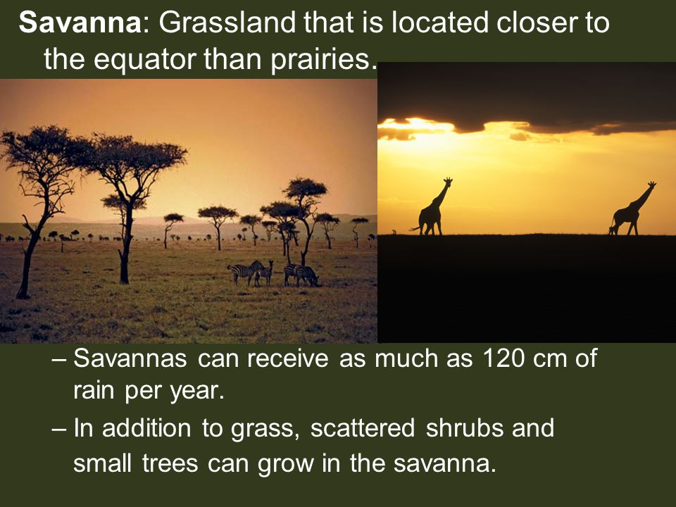 Savanna: Grassland that is located closer to the equator than prairies.