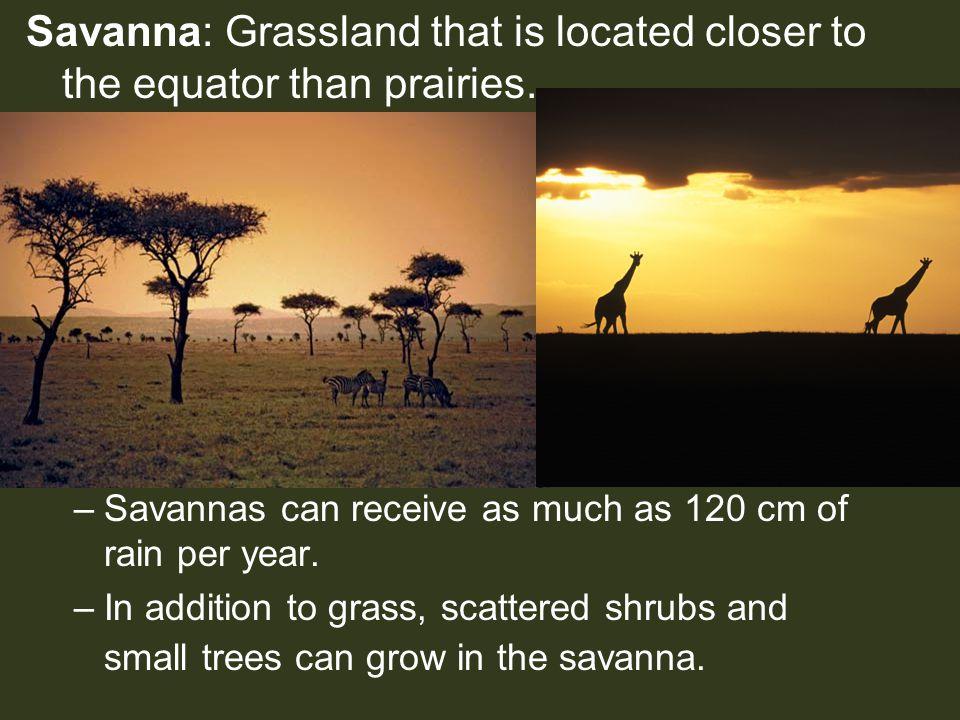 Savanna: Grassland that is located closer to the equator than prairies.