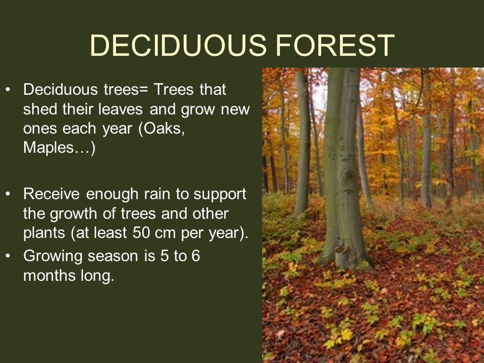 DECIDUOUS FOREST Deciduous trees= Trees that shed their leaves and grow new ones each year (Oaks, Maples…)