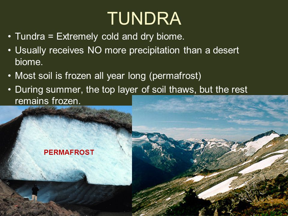 TUNDRA Tundra = Extremely cold and dry biome.