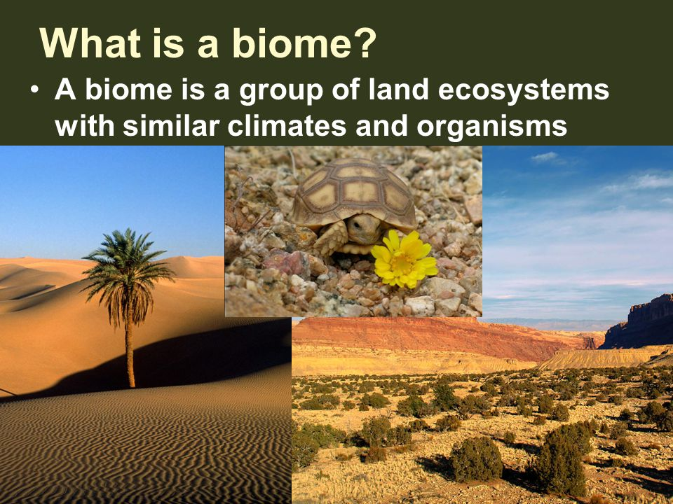 What is a biome A biome is a group of land ecosystems with similar climates and organisms
