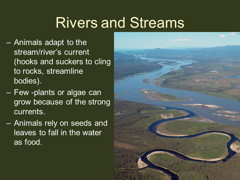 Rivers and Streams Animals adapt to the stream/river's current (hooks and suckers to cling to rocks, streamline bodies).