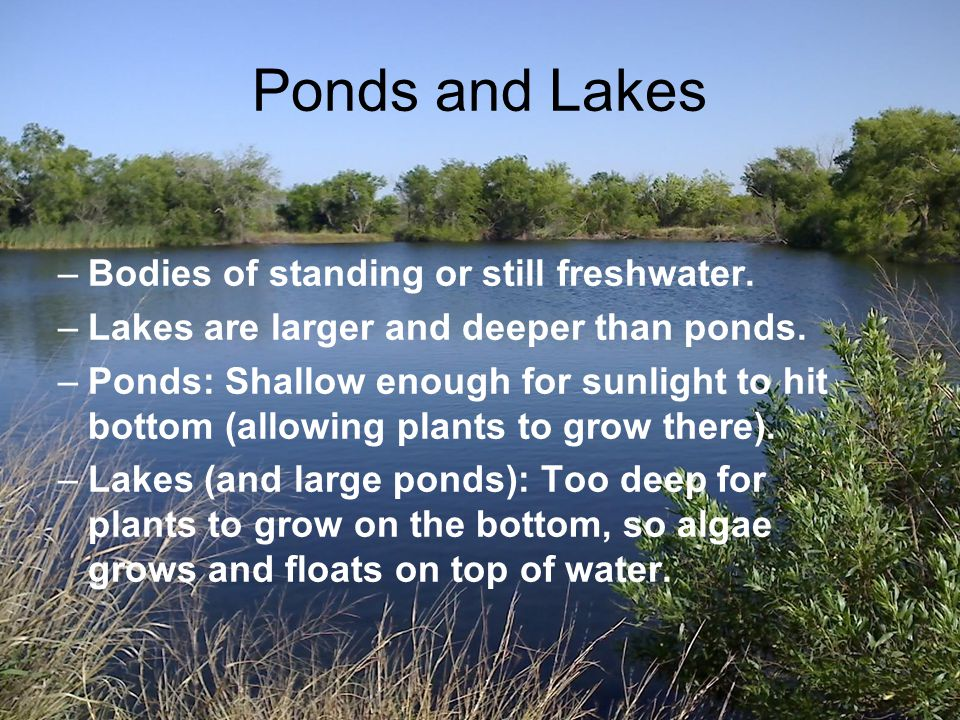 Ponds and Lakes Bodies of standing or still freshwater.