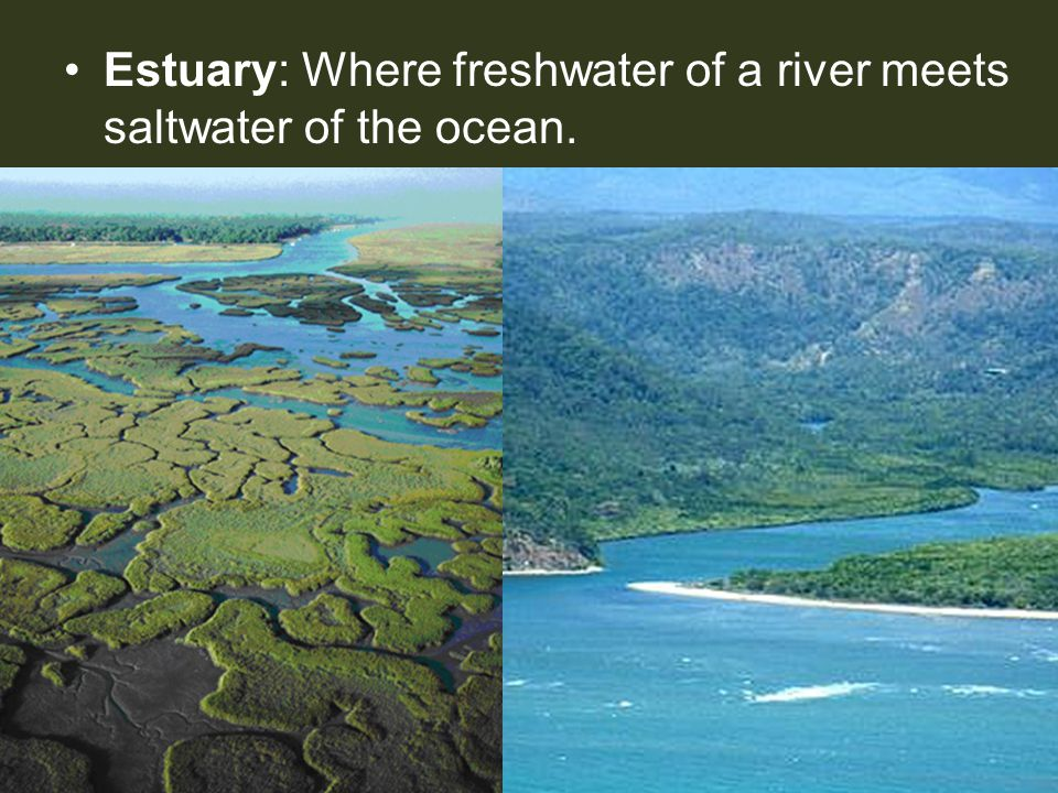 Estuary: Where freshwater of a river meets saltwater of the ocean.