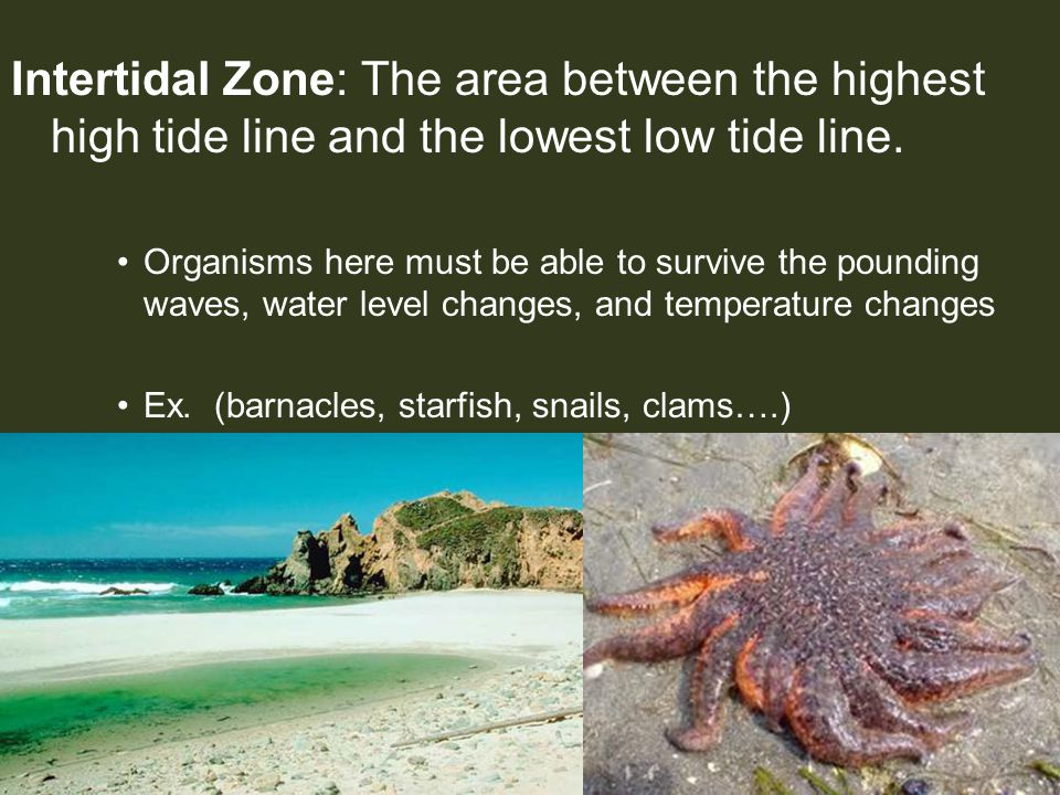 Intertidal Zone: The area between the highest high tide line and the lowest low tide line.
