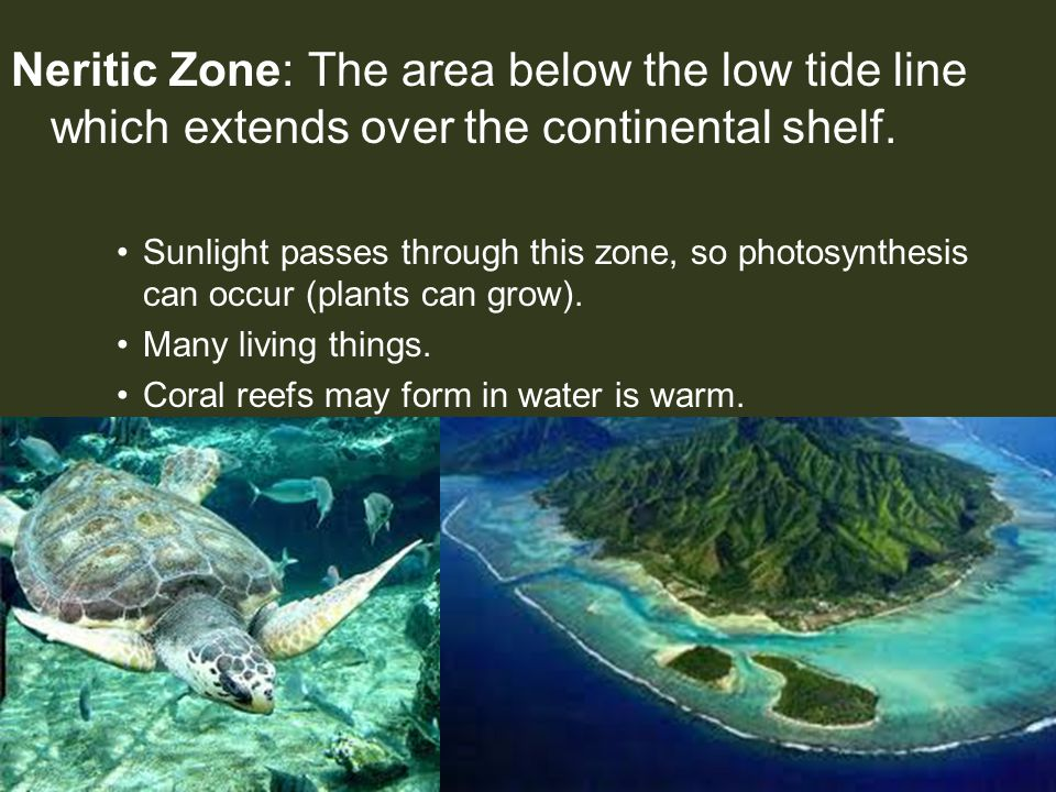 Neritic Zone: The area below the low tide line which extends over the continental shelf.