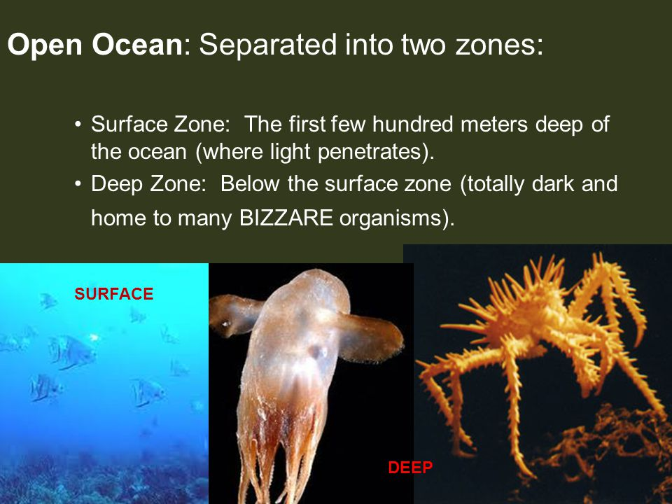 Open Ocean: Separated into two zones: