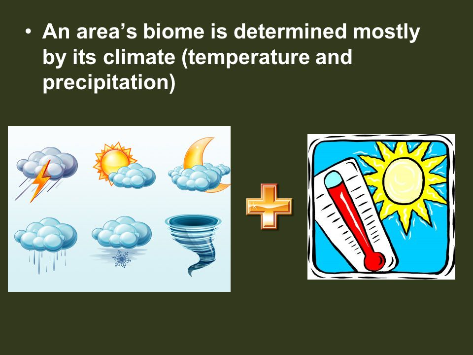 An area's biome is determined mostly by its climate (temperature and precipitation)