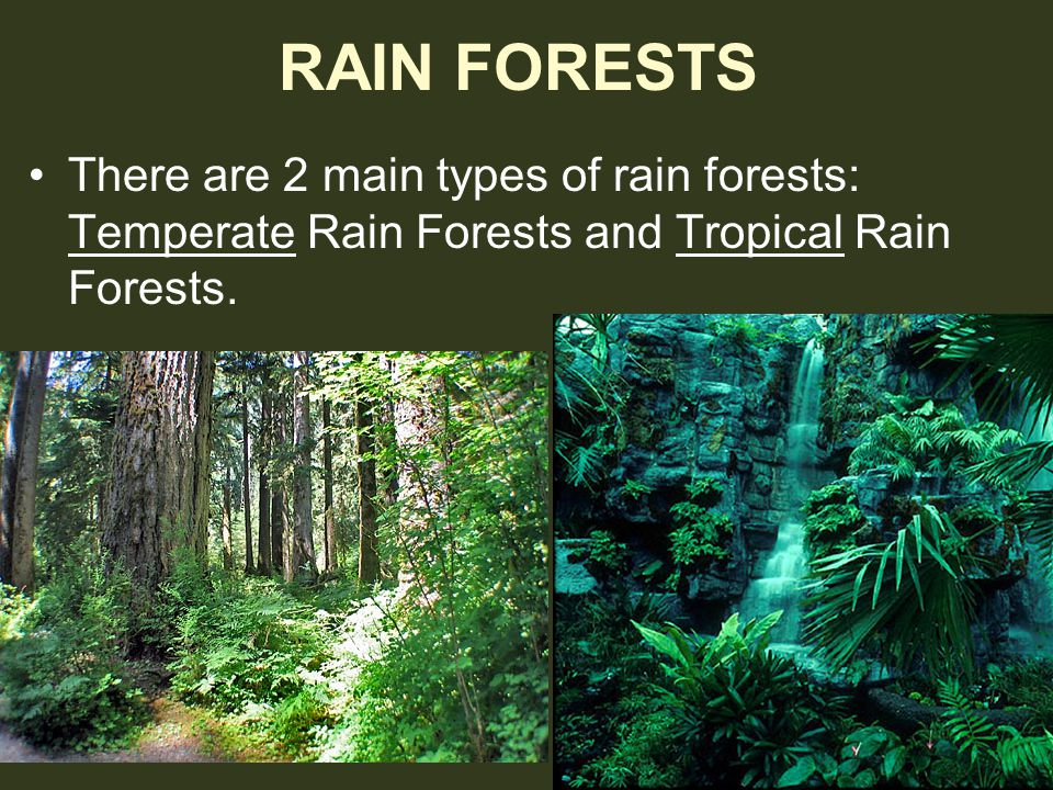 RAIN FORESTS There are 2 main types of rain forests: Temperate Rain Forests and Tropical Rain Forests.