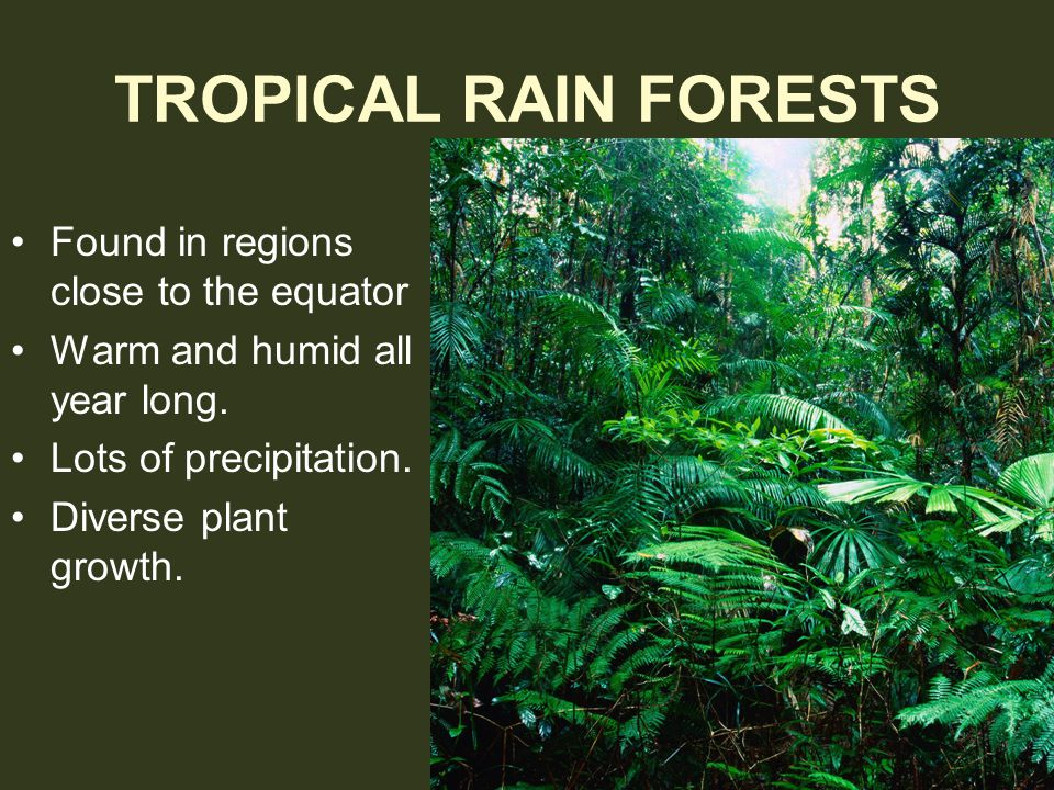 TROPICAL RAIN FORESTS Found in regions close to the equator
