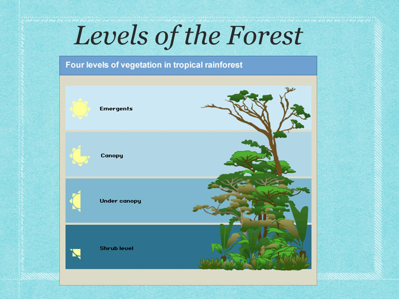 Levels of the Forest