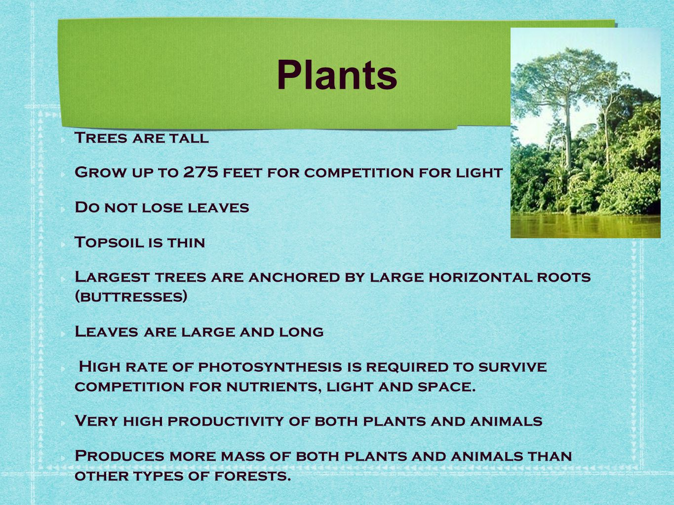 Plants Trees are tall Grow up to 275 feet for competition for light