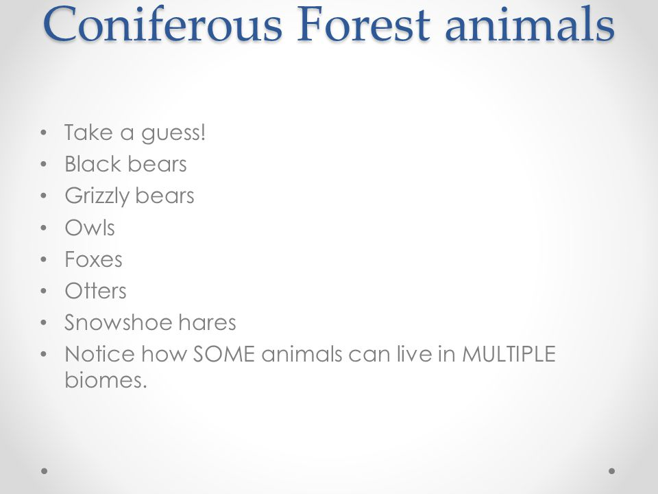 Coniferous Forest animals