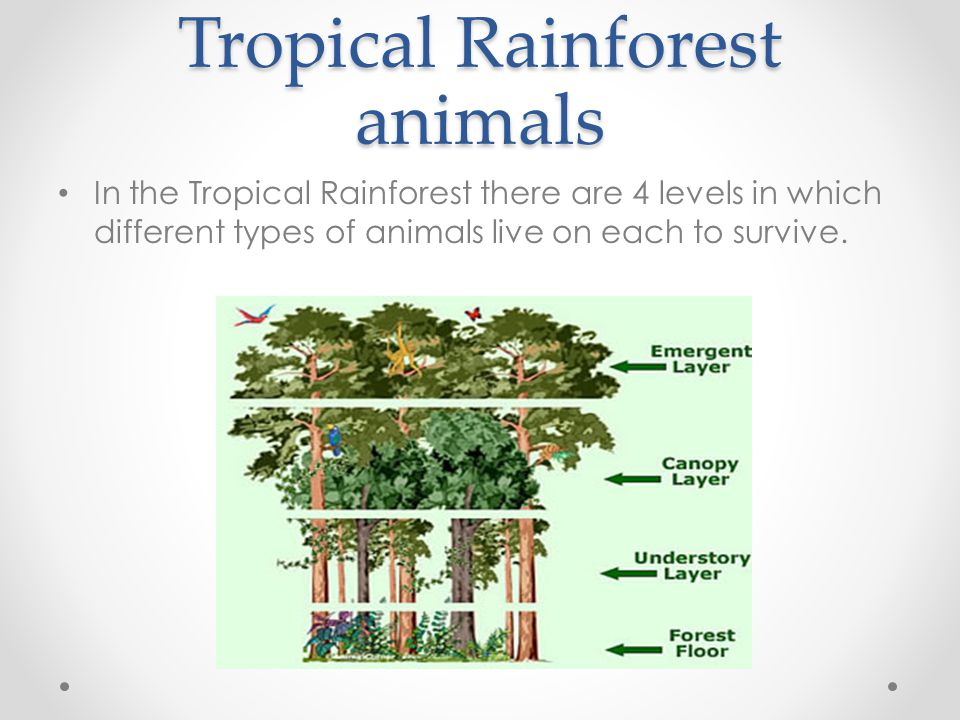 Tropical Rainforest animals