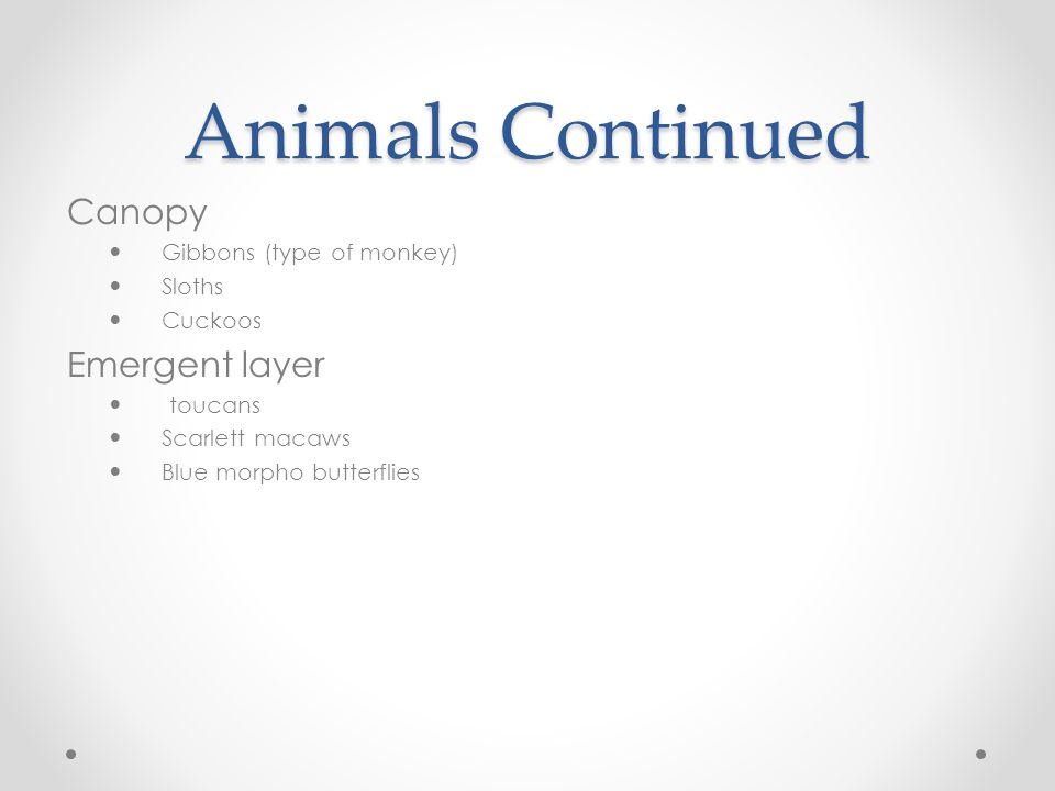 Animals Continued Canopy Emergent layer Gibbons (type of monkey)