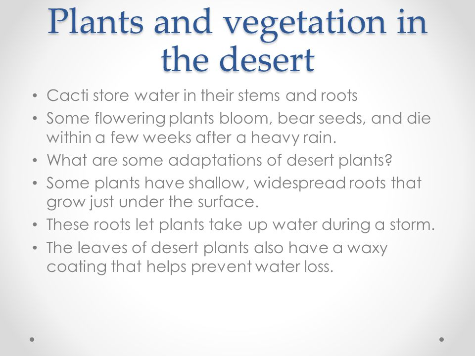 Plants and vegetation in the desert