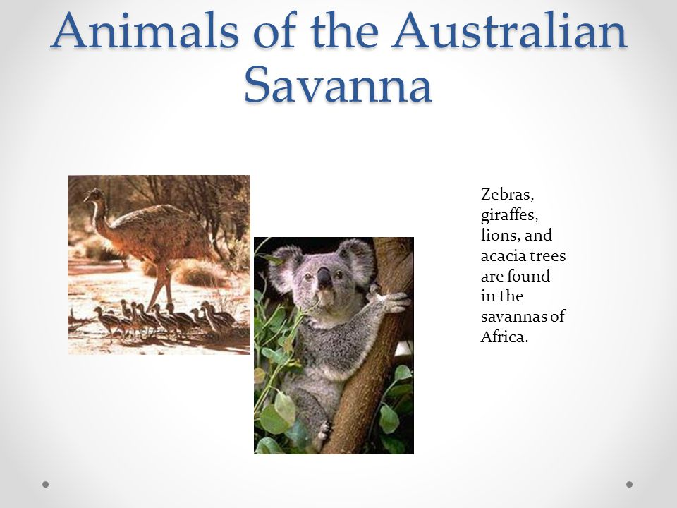 Animals of the Australian Savanna