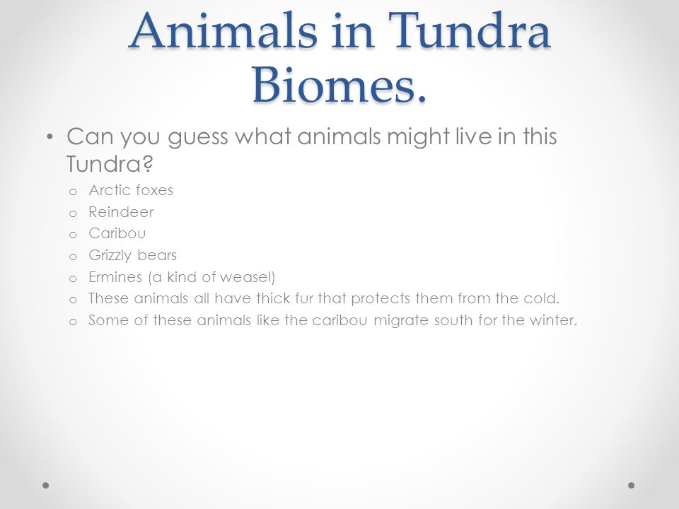 Animals in Tundra Biomes.
