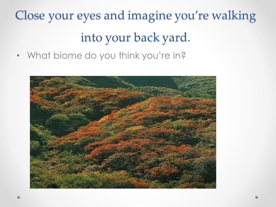 Close your eyes and imagine you're walking into your back yard.