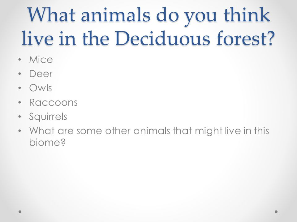 What animals do you think live in the Deciduous forest
