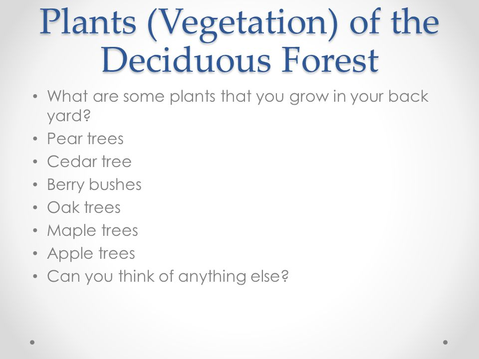 Plants (Vegetation) of the Deciduous Forest