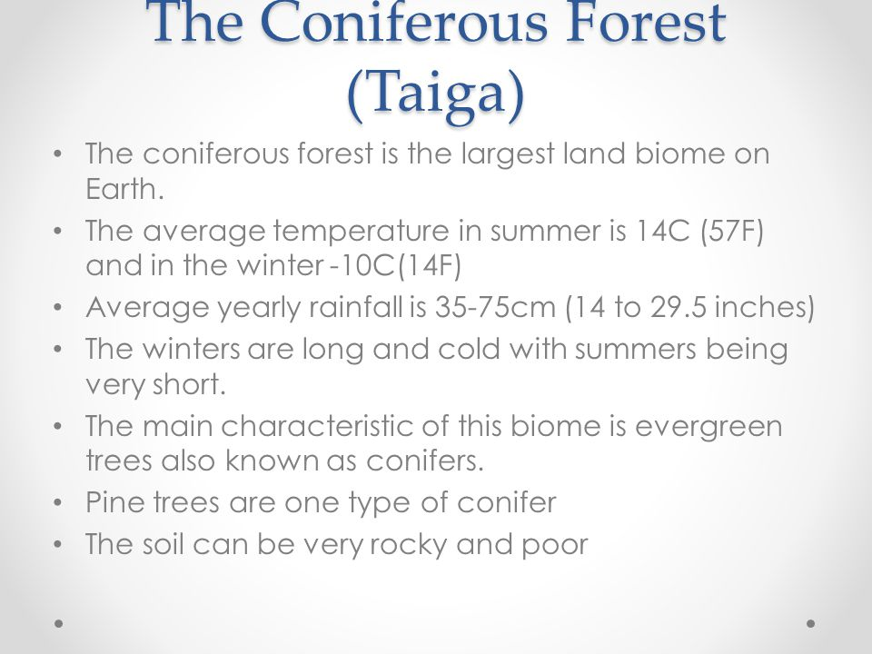 The Coniferous Forest (Taiga)