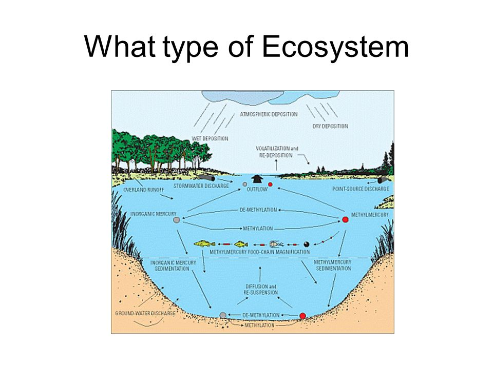 What type of Ecosystem