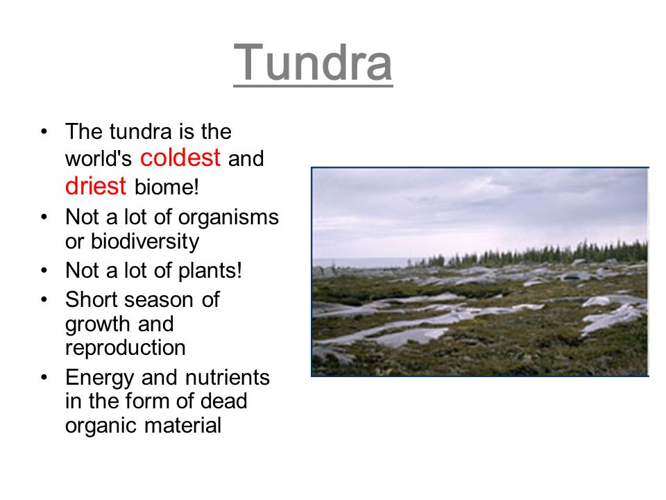 Tundra The tundra is the world s coldest and driest biome!