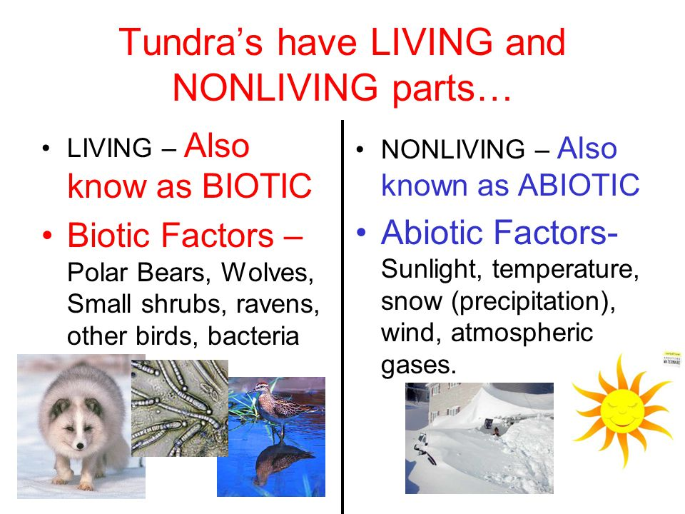 Tundra's have LIVING and NONLIVING parts…
