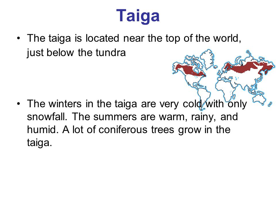 Taiga The taiga is located near the top of the world, just below the tundra.