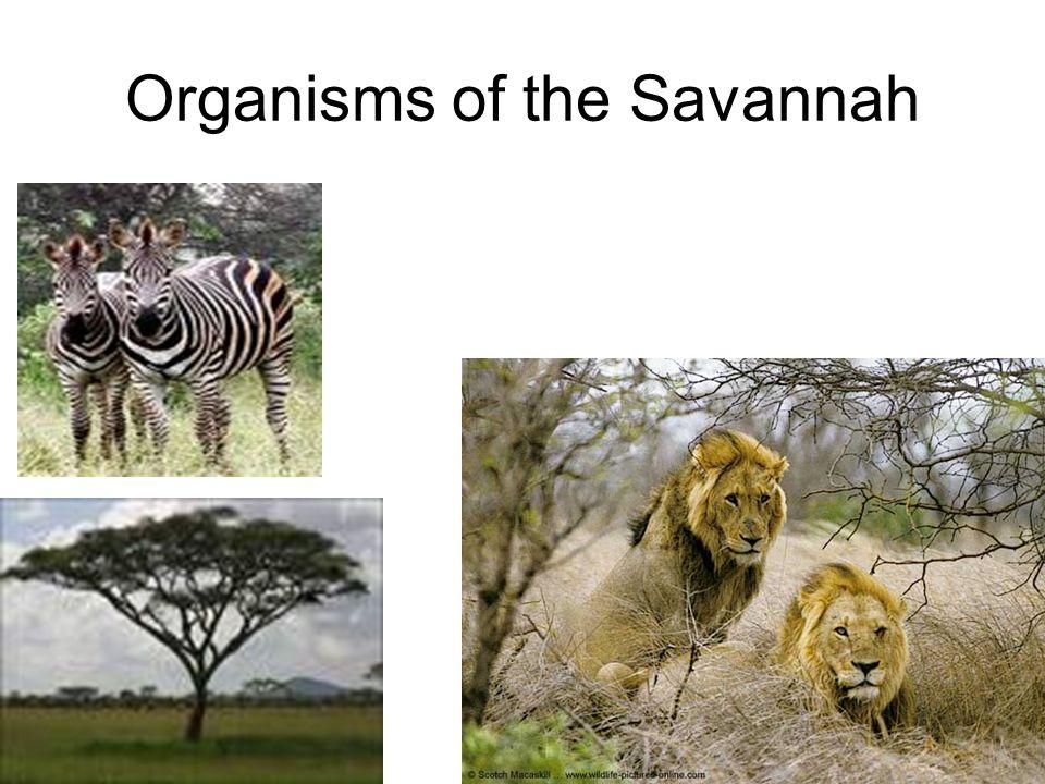 Organisms of the Savannah