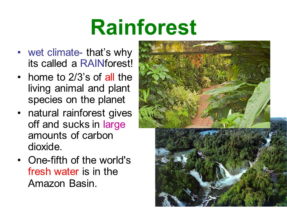 Rainforest wet climate- that's why its called a RAINforest!