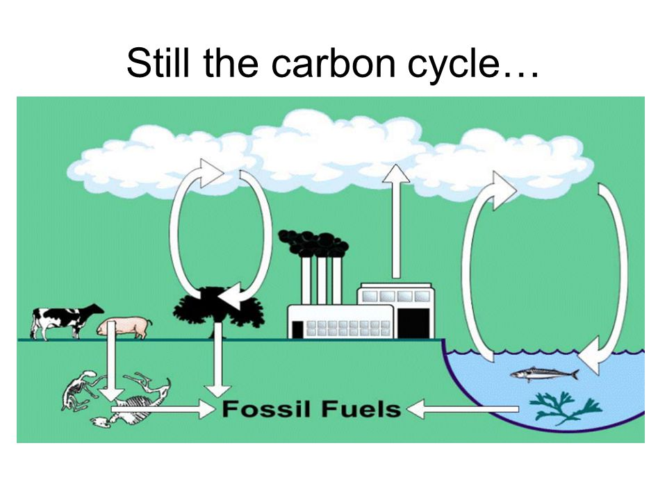 Still the carbon cycle…