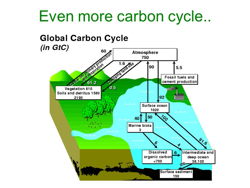 Even more carbon cycle..