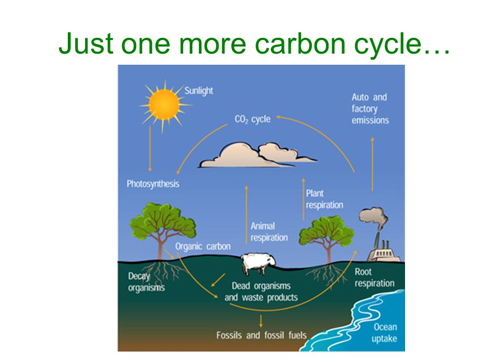 Just one more carbon cycle…