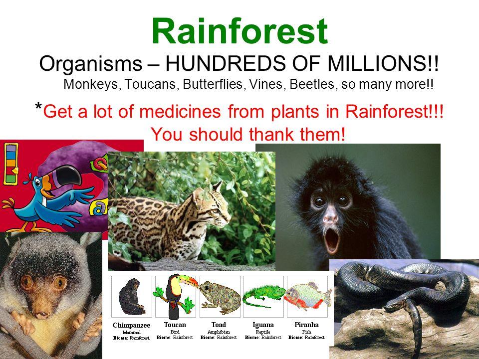 Rainforest Organisms – HUNDREDS OF MILLIONS!! Monkeys, Toucans, Butterflies, Vines, Beetles, so many more!!
