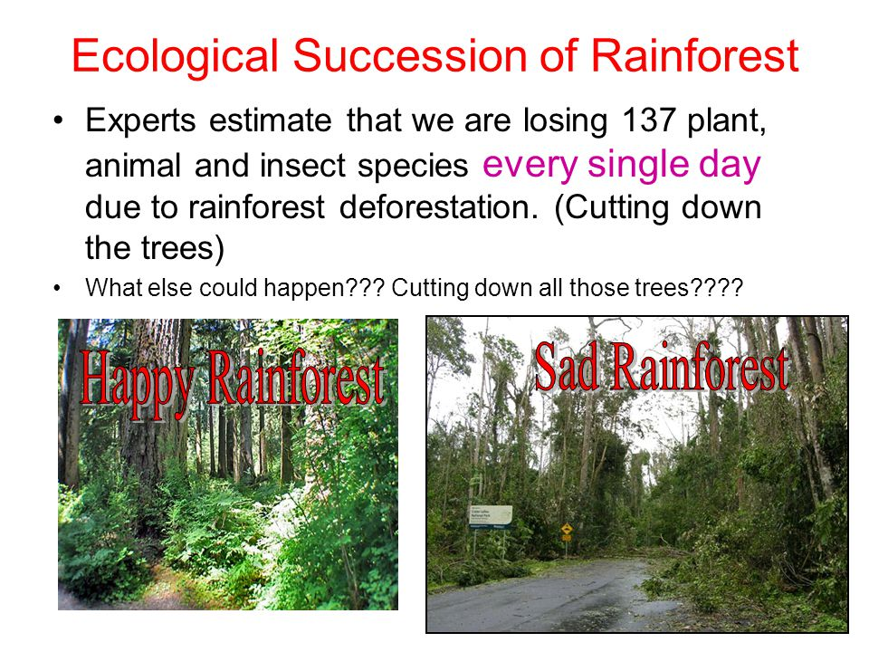 Ecological Succession of Rainforest
