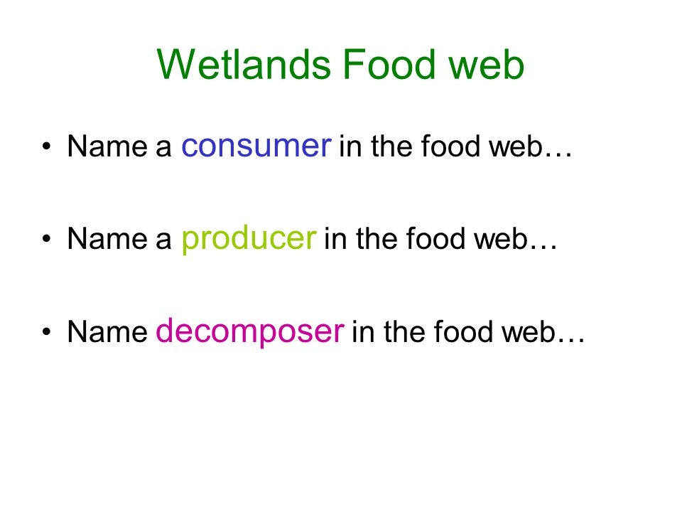 Wetlands Food web Name a consumer in the food web…