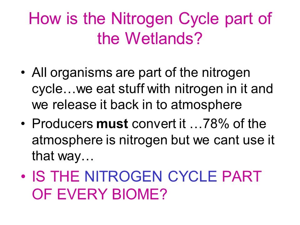 How is the Nitrogen Cycle part of the Wetlands