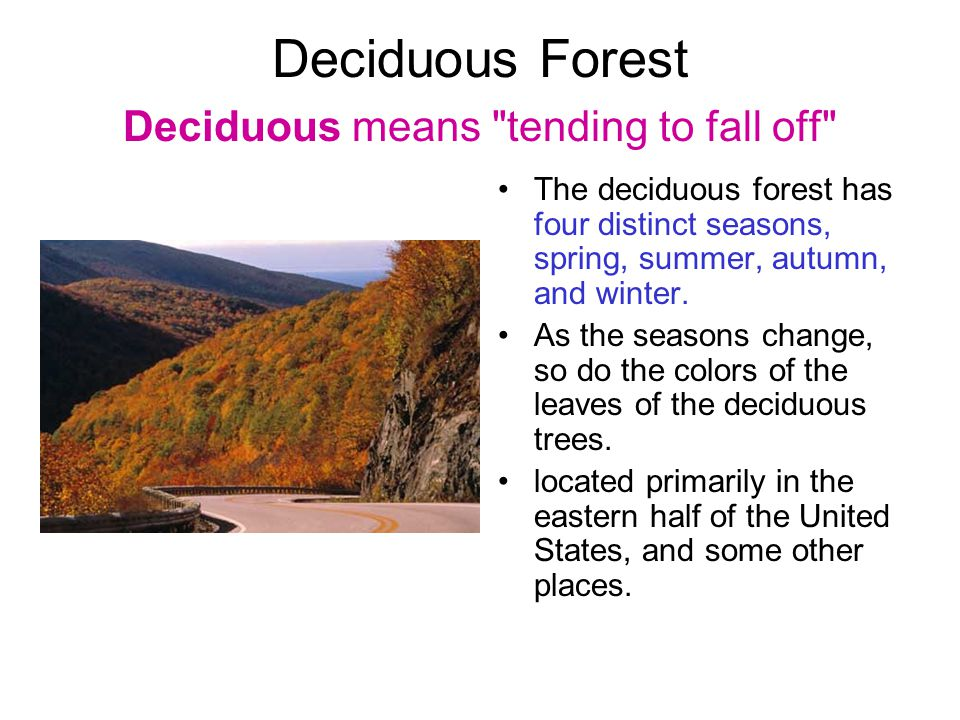 Deciduous Forest Deciduous means tending to fall off