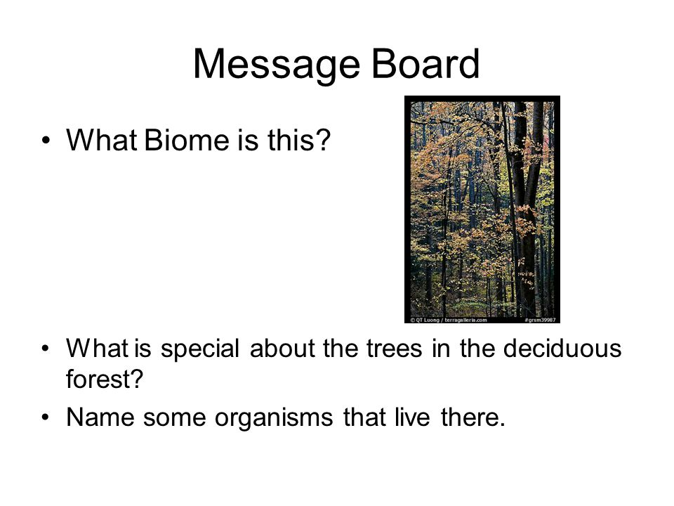 Message Board What Biome is this
