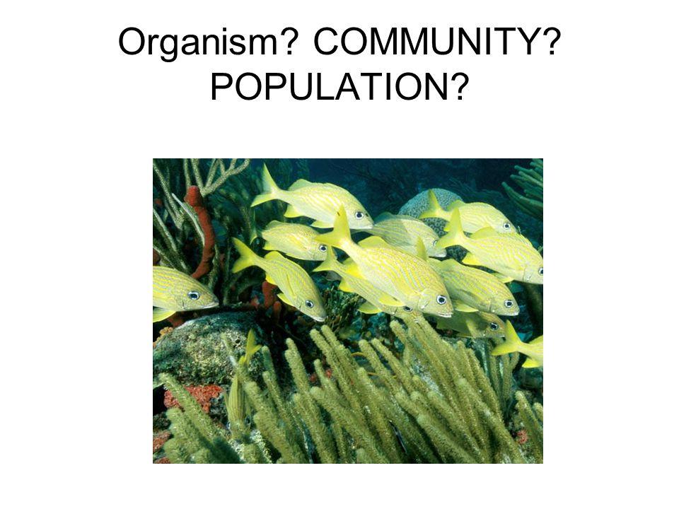 Organism COMMUNITY POPULATION