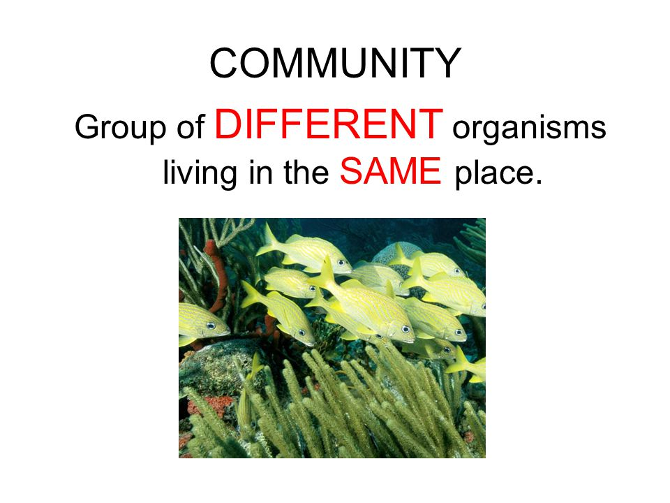 Group of DIFFERENT organisms living in the SAME place.